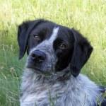 A dog portrait — Stock Photo
