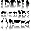 Animals — Vector de stock #16038259