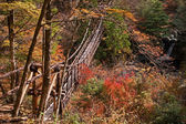 Autumn view of the bridge of lianas — Stock Photo