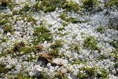 Velké ledové koule na trávě — Stock fotografie