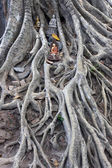 Buddhist figures among the roots of an old tree — Stock Photo
