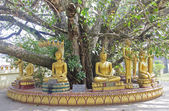 Statues of Buddha under an old tree in Vientiane — Foto de Stock