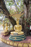 Statues of Buddha under an old tree in Vientiane — Stockfoto