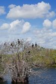 Everglades Birds — Stock Photo