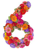 Number 6 made from flowers — Stock Photo