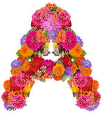 Flower alphabet isolated on white — Stock Photo
