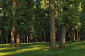 Gruenewald fraîche avec les rayons du soleil — Photo