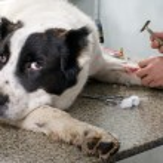 dierenarts arts maken een checkup — Stockfoto #13722106
