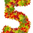 Number 5 made from autumn leaves, isolated on white — Stock Photo