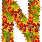 N, autumn alphabet isolated on white — Stock Photo