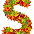 S, autumn alphabet isolated on white — Stock Photo