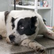 Sick dog in a veterinary clinic — 图库照片