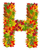 H, autumn alphabet isolated on white — Stock Photo