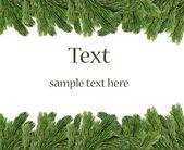 Noel ağacı dalları kenarlığında beyaz arka plan — Stok fotoğraf