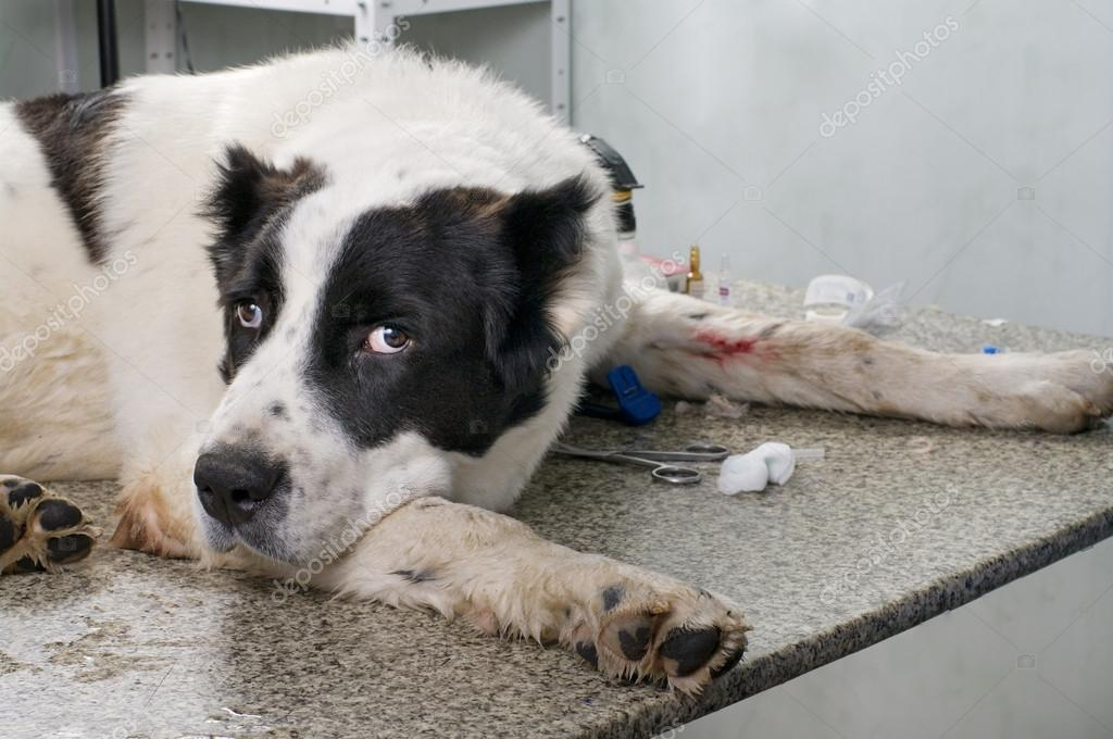 Sick dog in a veterinary clinic — Stock Photo #14358075