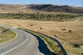 Umman çölde yol — Stok fotoğraf