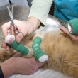 Wounded cat treated by veterinarians — Stock Photo #15823249