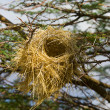 Bird's Nest on a Tree — Stock Photo