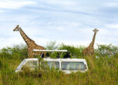 Tourists on safari take pictures of giraffes — Stock Photo
