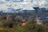 Wildfire in African savanna — Stock Photo