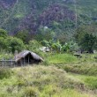 A traditional village in Papua - Stock Photo