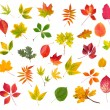collection of colorful autumn leaves isolated on white background — Stock Photo