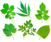 Collection set of Green Fresh Leaves — Stock Photo