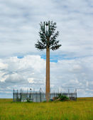 Antenna in the Savannah, Maasai Mara National Park, Kenya — Stock Photo