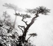 Bäume im nebel in bergen — Stockfoto