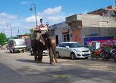 Elefante lleva conductor en la calle — Foto de Stock