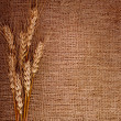 Wheat over the canvas background — Stock Photo #40268663