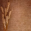 Wheat over the canvas background — Stock Photo