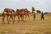 Cameleer  in desert  — Stock Photo