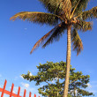 Coconut tree near Toblake — Stockfoto #12539843