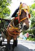 Pferd auf der straße, bandung, indonesien — Stockfoto