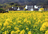 Spring landscape China — Stockfoto