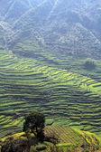 Chiny pejzaż wiosna — Zdjęcie stockowe