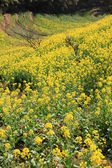 Spring landscape China — Stock Photo