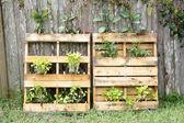 Pallet Vegetable Garden (1) — Stock Photo