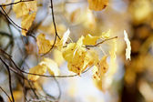 Autumn branches — Stock Photo