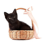 Black kitten in a wattled basket with a ribbon — Stock Photo