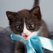 Small kitten with a blue bow — Zdjęcie stockowe