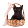 Black kitten in wattled basket with ribbon — Stock Photo #15079891