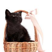 Gattino nero in un cesto di wattled con un nastro — Foto Stock