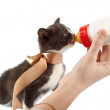 Feeding of a kitten from a small bottle — Stock Photo