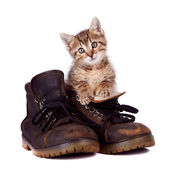 Kitten and boots — Stock Photo