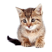 Pruhované kotě — Stock fotografie