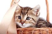 Полосатый котята в корзине — Стоковое фото