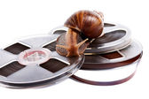 The snail creeps on a recorder tape — Stock Photo