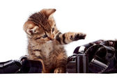 The striped kitten plays with a film — Stock Photo